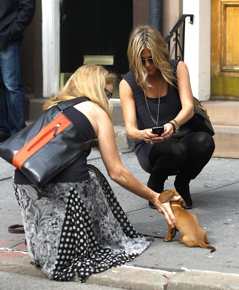 "Awwww. Jennifer Aniston, who sadly lost her beloved dog Norman at age 14 earlier this year, stopped to snap a pic of an adorable pup on the streets of New York City on Monday. cwpa/swarbrick/<a href=""http://www.infdaily.com"" target=""new"">INFDaily.com</a> - September 26, 2011"