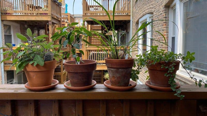 Back porch of a building with four flower pots full of greenery