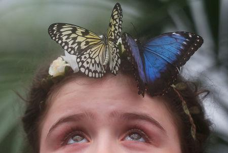 FILE PHOTO: Freya Gordon, aged 10, poses for a photograph with a butterfly during an event to launch the Sensational Butterflies exhibition at the Natural History Museum in London, Britain, March 28, 2018. REUTERS/Hannah McKay/File Photo