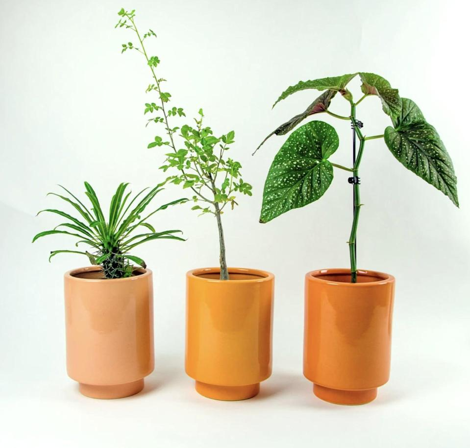 <p>The <span>Jungalow Kaya Pot by Justine Blakeney</span> ($59) makes a perfect planter and comes in three gorgeously warm shades of orange.</p>