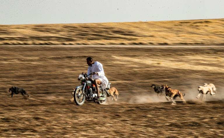Dog breeder Mohammed Derbas rides a motorcycle to exercise his speedy hounds, which are later sold for racing in the Gulf