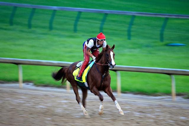 LOUISVILLE, KY - APRIL 30: California Chrome ridden by William Delgado trains on the track during the morning exercise session in preparation for the 140th Kentucky Derby at Churchill Downs on April 30, 2014 in Louisville, Kentucky. (Photo by Rob Carr/Getty Images)