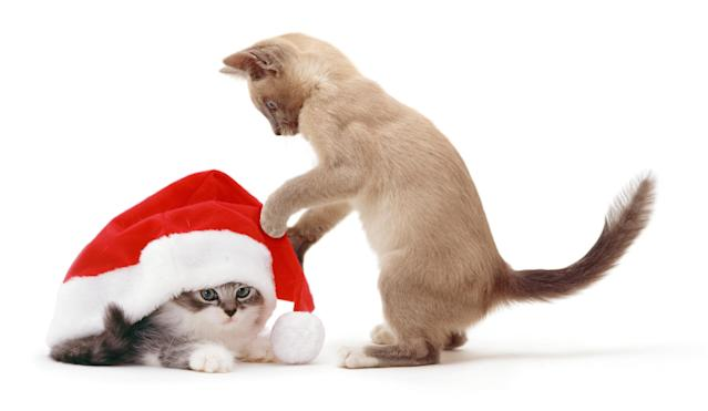 <p>Kittens with Father Christmas hat (Photo: Warren Photographic/Caters News) </p>