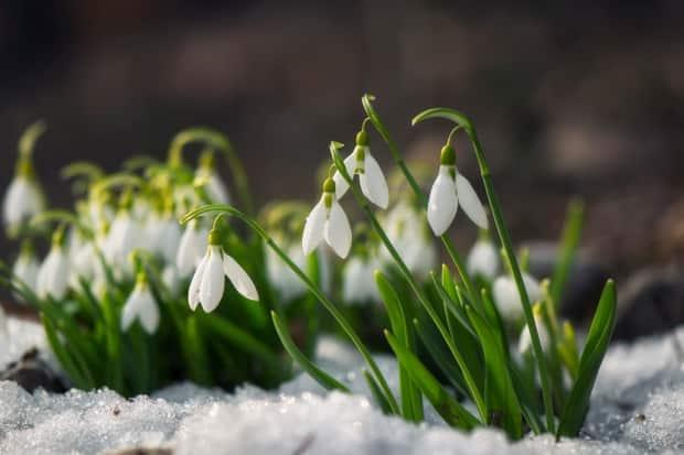 Terri Lang says May snow in Sask. is not uncommon. (Credit: iStock/Getty Images - image credit)