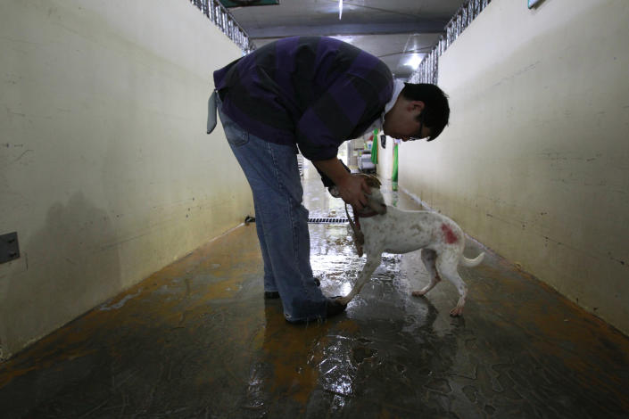 In this photo taken on Monday, April 9, 2012, Taiwanese photographer Tou Chih-kang greets a dog scheduled to be euthanized later in the day at a government-run shelter in Taoyuan, northern Taiwan. In an ongoing project, photographer Tou makes portraits of shelter dogs in the final moments before they are put down by lethal injection. Tou has been visiting dog shelters for two years now, making human-like portraits that give a sense of dignity and esteem to some 400 canines, in hopes of educating the public on the proper care of pets. This year Taiwanese authorities will kill an estimated 80,000 stray dogs at 38 pounds scattered throughout the island. (AP Photo/Wally Santana)