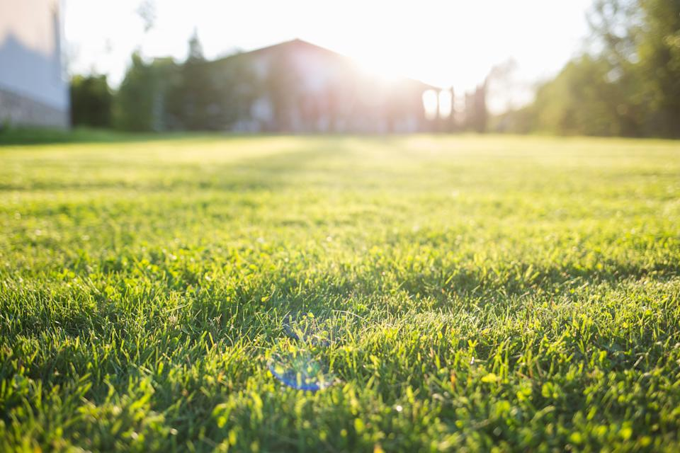 lawn at home. On a Sunny summer day