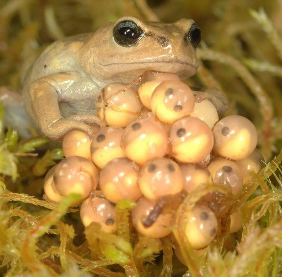 Deadly Fungus, Not Climate Change, Killing Frogs in Andes