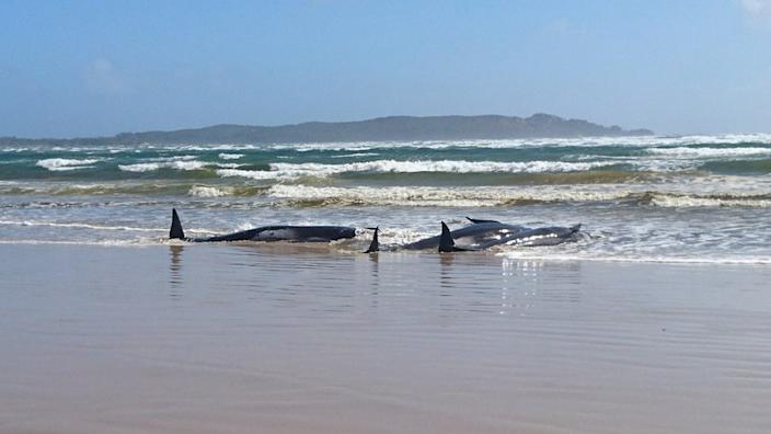 Some of the whales have washed up onto a beach