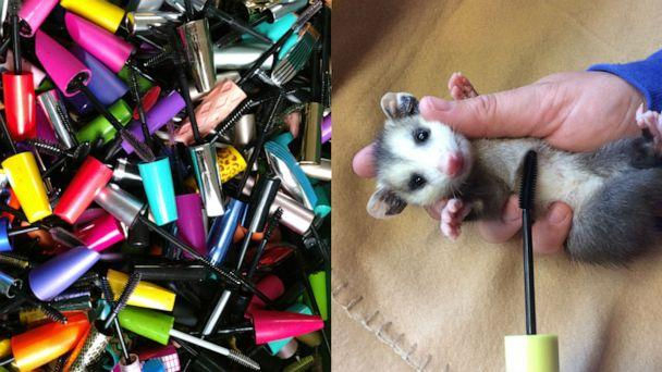 PHOTO: Through Appalachian Wildlife Refuge's Wands for Wildlife program you can donate your old mascara wands toward a great cause. (Appalachian Wildlife Refuge/Wands for Wildlife)