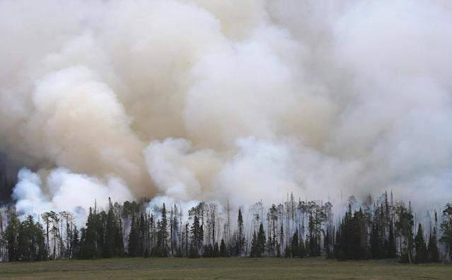 "<p>Smoke bellows from a stand of trees from a wildfire that is burning in the area on June 25, 2017 outside Panguitch, Utah. The fire named the ""Brian Head Fire"" started last week and has burned more then 43,000 acres and destroyed 13 homes as of June 25th. (George Frey/Getty Images) </p>"