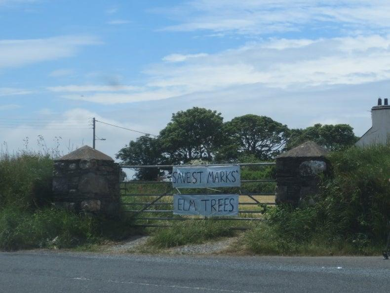 'Save St Marks elm trees', reads a banner in the village where over 20 mature trees are to be chopped down to improve access to a farm (Manx Wildlife Trust)