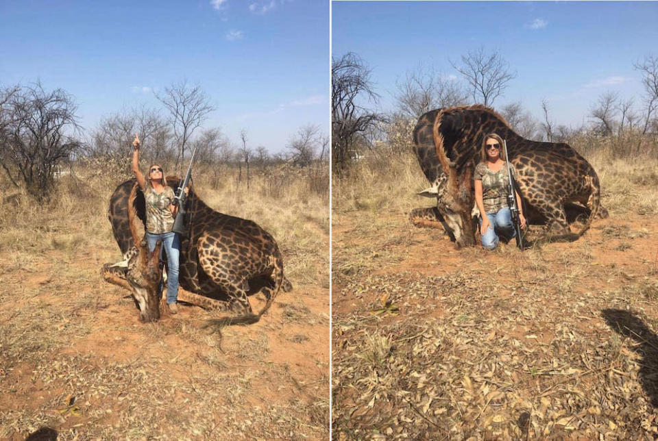 Tess Thompson Talley poses with a dead giraffe in South Africa (Pictures: Tess Thompson Talley/Facebook)