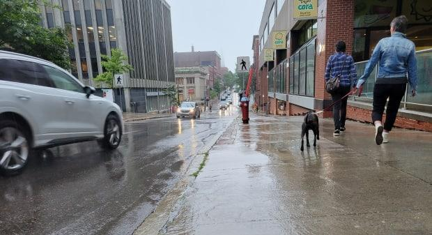 Heavy rain is expected in southeastern New Brunswick, including Saint John and the Fundy coast. (Hadeel Ibrahim/CBC - image credit)