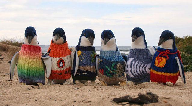 Some of the little penguin vests donated to the Penguin Foundation. Source: Supplied