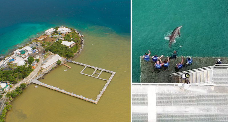 On the left is an aerial photo of polluted water around the Coral World dolphin pens in Water Bay. On the right, a drone image shows a dolphin in the water at Coral World and trainers looking at it.