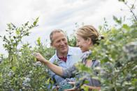 """<p>It might be a drag if you had to do it every day, but picking fruit with your sweetie on a beautiful afternoon is a great date. And just think of all the yummy desserts you can make with the fruits of your labor.</p><p><strong>Related: </strong><a href=""""https://www.countryliving.com/food-drinks/g744/fruit-dessert-recipes-0309/"""" rel=""""nofollow noopener"""" target=""""_blank"""" data-ylk=""""slk:Fruit Dessert Recipes That'll Make Your Summer Even Sweeter"""" class=""""link rapid-noclick-resp"""">Fruit Dessert Recipes That'll Make Your Summer Even Sweeter</a></p><p><a class=""""link rapid-noclick-resp"""" href=""""https://www.amazon.com/1852-3-Jersey-Garden-Gloves-3-Pairs/dp/B001IMOG18/ref=sr_1_5?tag=syn-yahoo-20&ascsubtag=%5Bartid%7C10050.g.35949770%5Bsrc%7Cyahoo-us"""" rel=""""nofollow noopener"""" target=""""_blank"""" data-ylk=""""slk:SHOP GARDEN GLOVES"""">SHOP GARDEN GLOVES</a></p>"""