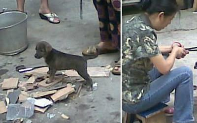 The Chinese woman is said to have roasted the dog near the entrance of Kengkou market, in Guangzhou. (Screengrab from chinasmack.com)