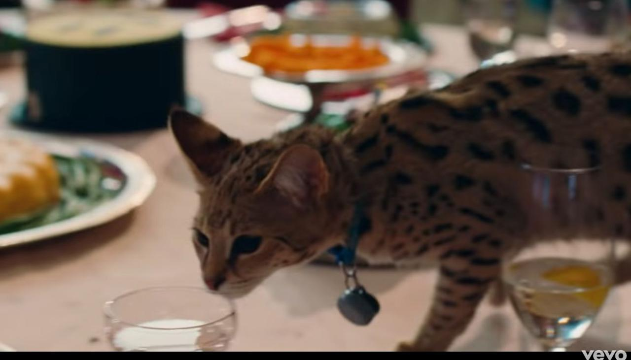 Justin Bieber's Cat Appears in Music Video