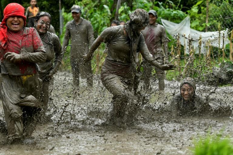 Standing on fields flooded by the onset of monsoon, the farmers dance and sling mud on each other as they plant the seedlings