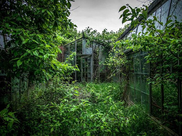 <p>Abandoned overgrown greenhouse in Ohio. (Photo: Johnny Joo/Caters News) </p>