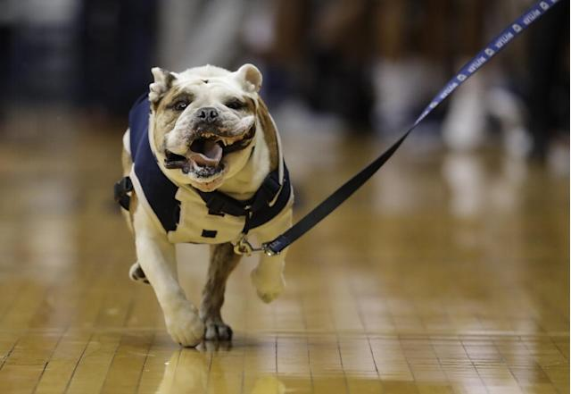 Butler Blue III in action before an NCAA college basketball game between Butler and Xavier, Saturday, Jan. 14, 2017, in Indianapolis. (AP Photo/Darron Cummings)