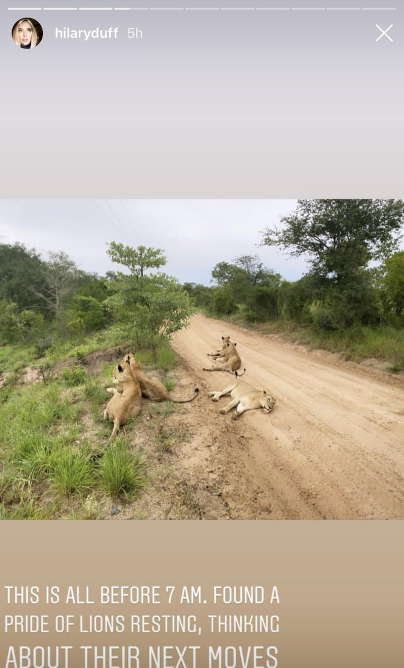 Hilary Duff shared a photo of a pride of lions on her African honeymoon. (Hilary Duff/Instagram)
