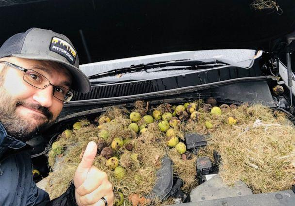 PHOTO: Chris Persic and his wife Holly discovered around 200 walnuts under the hood of their car. (Courtesy Chris Persic)