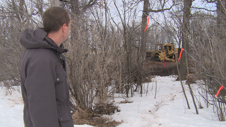 'They are irreplaceable': Winnipeg's Parker Lands trees shredded for rapid transit line