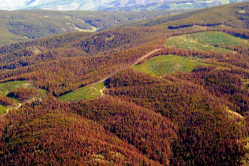Report: Warming bringing big changes to forests