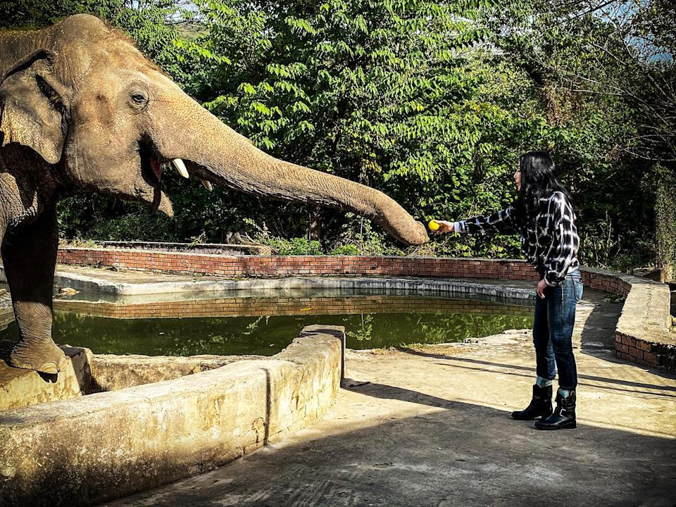 """<p>The pop diva fought to move Kaavan, who gained fame as <a href=""""https://people.com/pets/cher-helps-worlds-loneliest-elephant-find-new-home/"""" rel=""""nofollow noopener"""" target=""""_blank"""" data-ylk=""""slk:&quot;The World's Loneliest Elephant,&quot;"""" class=""""link rapid-noclick-resp"""">""""The World's Loneliest Elephant,""""</a> from a Pakistani zoo to a Cambodian sanctuary. The four-year quest and journey of 2,300 miles inspired the documentary <em>Cher & The Loneliest Elephant</em>, which hit the Smithsonian Channel in May of 2021.</p> <p>""""I can't explain it in words. It was joyous,"""" the icon told <a href=""""https://people.com/pets/cher-worlds-loneliest-elephant-documentary-interview/"""" rel=""""nofollow noopener"""" target=""""_blank"""" data-ylk=""""slk:PEOPLE"""" class=""""link rapid-noclick-resp"""">PEOPLE</a> of seeing Kaavan settle into his new home at the Wildlife Sanctuary at last. """"He was so engaged. His behavior had completely changed.""""</p>"""