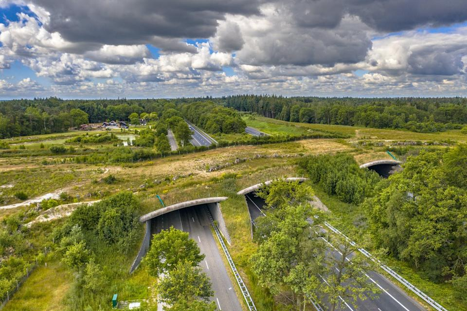 An overpass of vegetation.