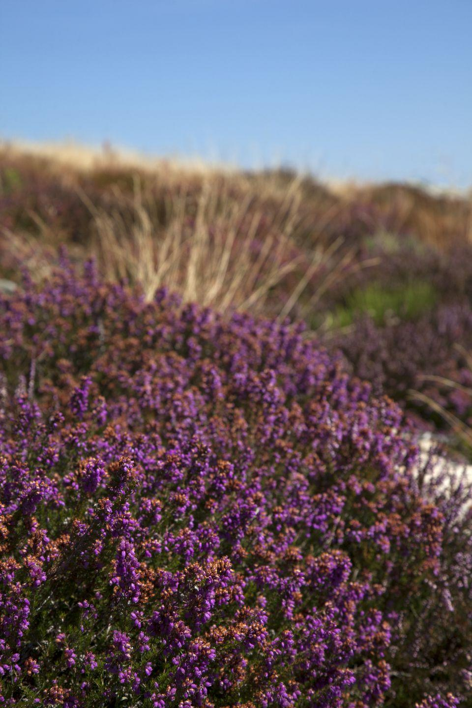 <p>Michael, Jason, and Christopher held steady for boys. Jennifer and Amy maintain popularity, but were joined by fast-rising Heather. The botanical name describes a purple-flowered Eurasian heath that grows abundantly on moorland and heathland. It became one of the most popular names in the 70s.</p>