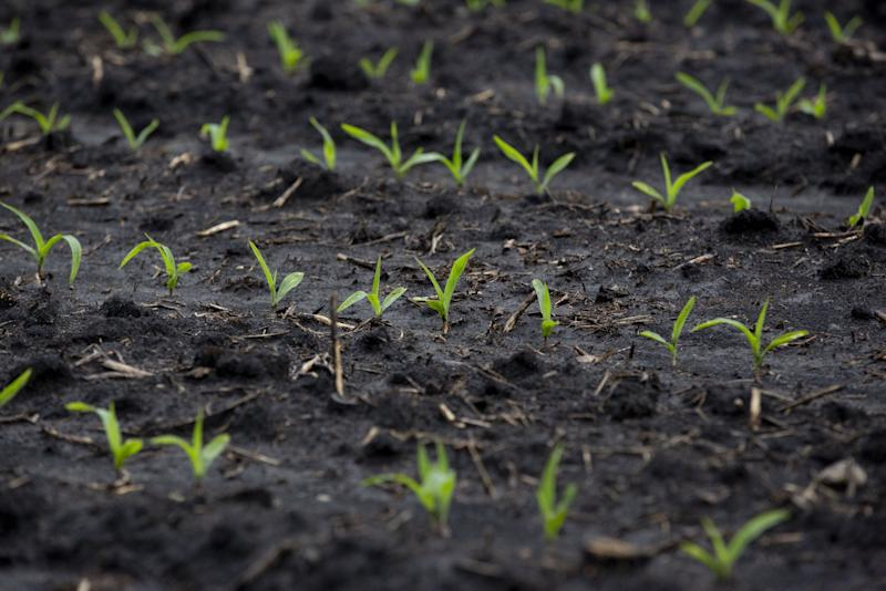 U.S. Corn Planting Is Slowest on Record for This Time of Year