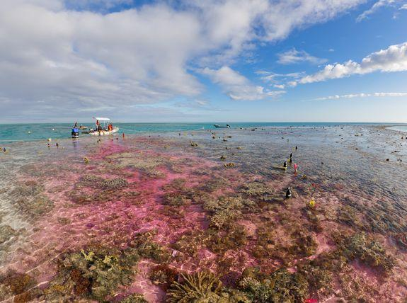 Marine scientists distributed carbon dioxide-infused seawater across the Great Barrier Reef to simulate how acidic the oceans will likely be in the next few decades.