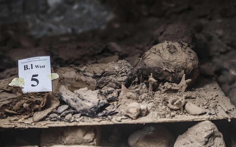 The discovery was made in the village of Tuna al-Gabal, a vast archaeological site on the edge of the western desert - Credit: AFP