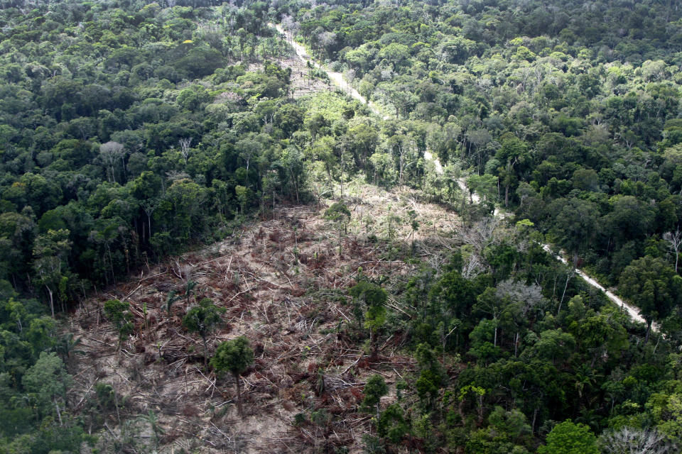 A deforested section of Amazon rainforest is seen near Monte Dourado City