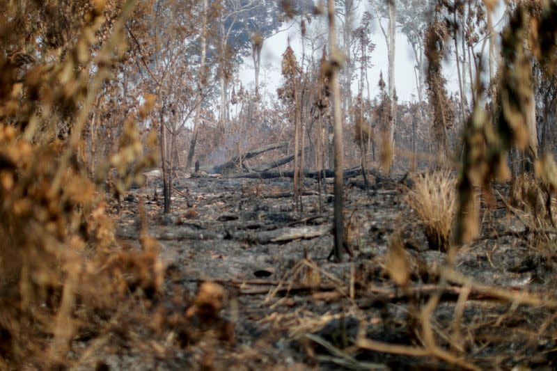 FILE PHOTO: A burning tract of the Amazon jungle