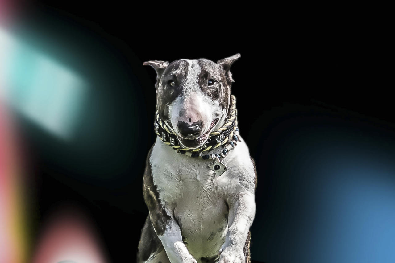 <p>The images show many different breeds, from an American pit bull to a Doberman. (Photo: Peter Mueller/Caters News) </p>