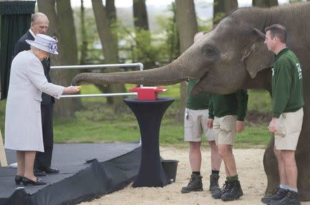 Elephant Donna goes bananas on meeting Queen at Whipsnade Zoo