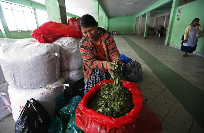 A market vendor shows her coca leaves to the camera as she waits for clients, to which she sells one pound of leaves for 35 Bolivianos, or about $5 U.S. dollars, inside a legal coca leaf market in La Paz, Bolivia, Friday, Jan. 11, 2013. President Evo Morales' global crusade to decriminalize the coca leaf, launched in 2006 after the coca growers' union leader was first elected president of Bolivia, has finally attained a partial, if largely, symbolic victory. A year ago, Bolivia temporarily withdrew from the 1961 U.N. convention on narcotic drugs because it classifies coca leaf, the raw material of cocaine, as an illicit drug. It has now rejoined, with one important caveat: The centuries-old Andean practice of chewing or otherwise ingesting coca leaves, a mild stimulant in its natural form, will now be universally recognized as legal within Bolivia. (AP Photo/Juan Karita)
