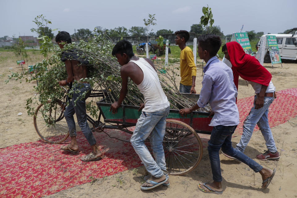 Indian laborers bring plant saplings to plant as part of an annual tree plantation campaign on the outskirts of Prayagraj, in northern Uttar Pradesh state, India, Sunday, July 4, 2021. (AP Photo/Rajesh Kumar Singh)