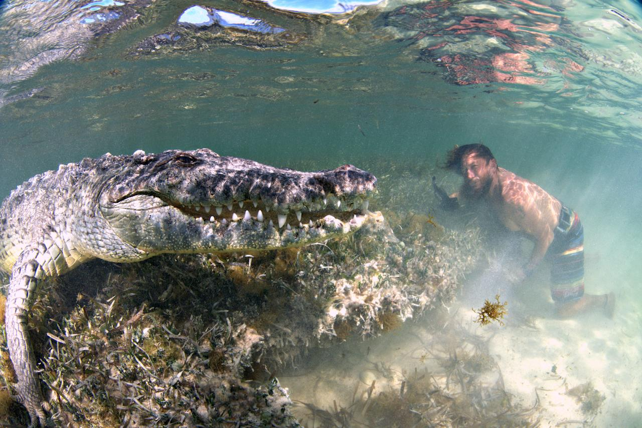 <p>The pictures, taken in July, show the photographer just inches away from the carnivorous crocs, who seem more than happy to pose for the camera. (Photo: Alex Suh/Caters News) </p>