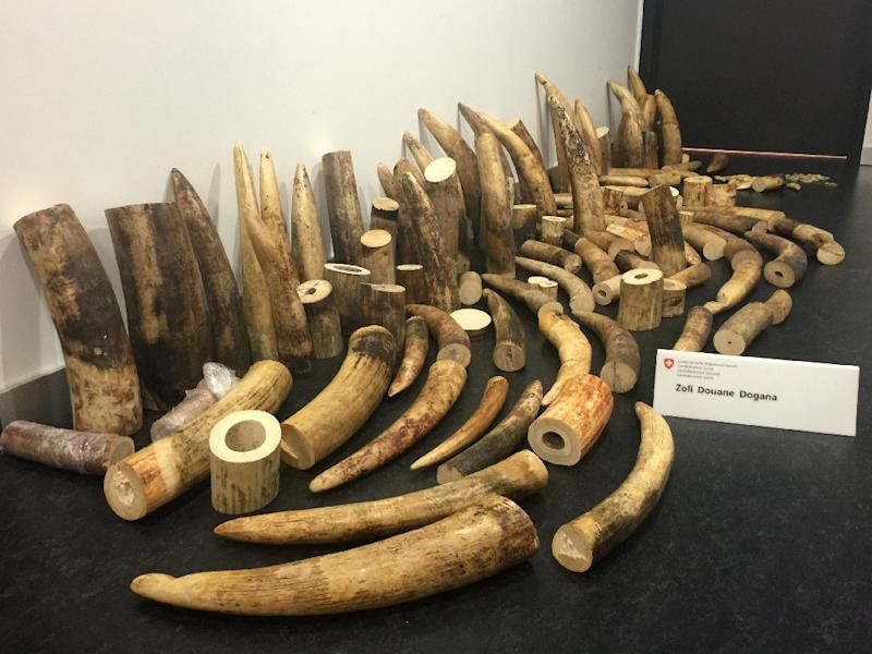 Photo released on August 4, 2015 by the Swiss Federal Customs Administration shows elephant ivory -- worth more than 400,000 USD on the black market -- which was seized at Zurich airport on July 6