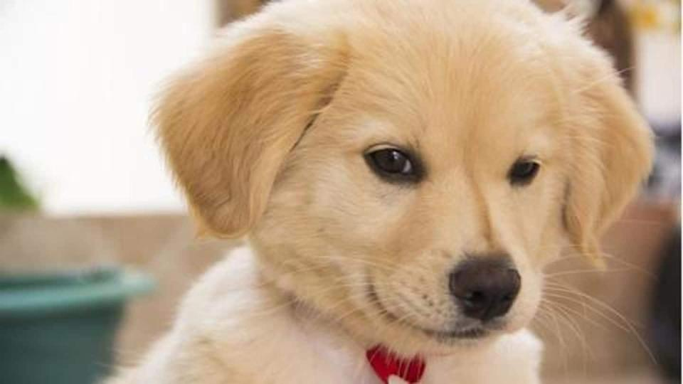 Treat mild ailments of your fido using these home remedies