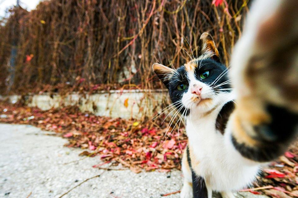 """<p>This cat just wants to take his own selfies. I don't blame him, he's going for an #aesthetic. </p><p><strong>RELATED: </strong><a href=""""https://www.redbookmag.com/love-sex/relationships/news/a50094/ill-never-have-cute-couple-photos/"""" rel=""""nofollow noopener"""" target=""""_blank"""" data-ylk=""""slk:Why My Boyfriend of 5 Years and I Only Have 5 Photos of the Two of Us Together"""" class=""""link rapid-noclick-resp""""><strong>Why My Boyfriend of 5 Years and I Only Have 5 Photos of the Two of Us Together</strong></a></p>"""