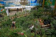In one wing of the enormous house is a massive tropical greenhouse of several hundred square metres under a huge glass roof (AFP/Wakil KOHSAR)