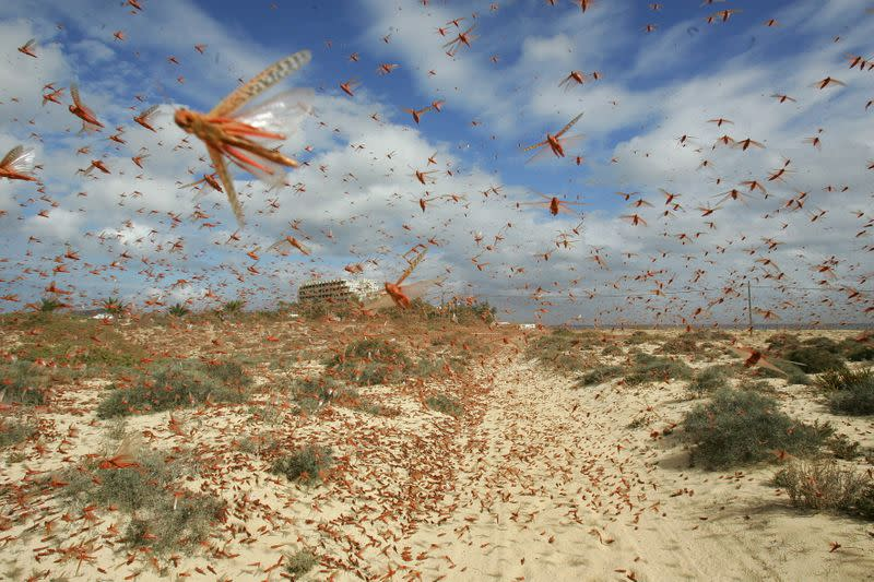 World Bank approves record $million to battle locust swarms