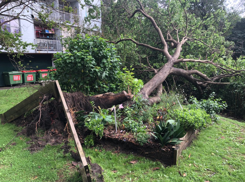 A large tree is ripped from the ground in Glebe in Sydney. Source: Josh Dutton/Twitter