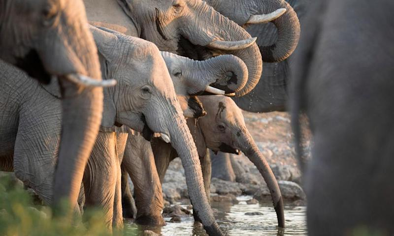 Africa minister Harriet Baldwin, pledged that the UK will lead by example, by 'shutting down our ivory trade', at a summit in Botswana this week.