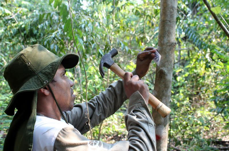 Rioterra biologist Alexandre Lima Queiroz marks a tree on a parcel of Amazon rainforest in Itapua do Oeste